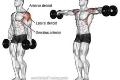 Dumbbell lateral raise exercise illustration