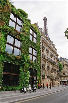 I remember walking by that building in Paris and being in awe of the greenery growing on it!