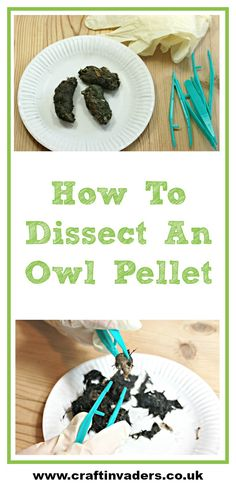 Dissecting Owl Pellets is a fascinating and educational activity to carry out with your kids. Here is our step by step guide.