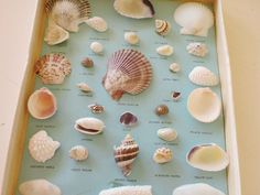 I had a set of these when I was young!  They came in a box and all the shells were labeled!  Cool!