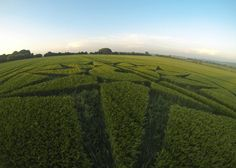 Crop Circle Picture Gallery: - Willoughby Hedge, nr Mere (Wiltshire) 05/06/2016