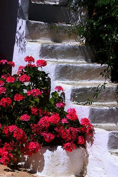 White stairs and pink geranium in Parikia, Paros