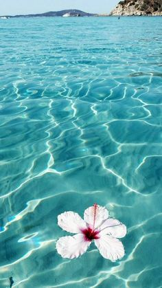 Beautiful landscape images - Images for Whatsapp- Imagens de paisagens lindas – Imagens para Whatsapp Beautiful landscape images – Images for Whatsapp - Tumblr Wallpaper, Ocean Wallpaper, Aesthetic Iphone Wallpaper, Flower Wallpaper, Nature Wallpaper, Aesthetic Wallpapers, Iphone Wallpaper Summer, Walpaper Iphone, Palm Tree Wallpaper Iphone X