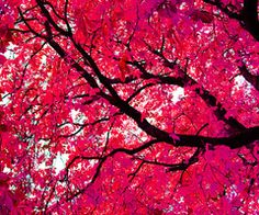 I would love to lay under this tree.