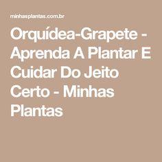 Orquídea-Grapete - Aprenda A Plantar E Cuidar Do Jeito Certo - Minhas Plantas