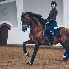 Allie : And here we have Camelot VV hes Nicolas´s horse hes lucas brother. we went to see him practice and he let me use his dressage horse Camelot VV or how he says him Cavotte short for camelot VV . ♥︎