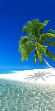 Travel Discover Island Time Best Travel images in 2019 Vacation Resorts Vacation Places Vacation Spots Jamaica Vacation Inclusive Resorts Beach Wallpaper Iphone Wallpaper Tropical Beaches Beach Scenes Beautiful Places To Travel, Most Beautiful Beaches, Beautiful Nature Wallpaper, Beautiful Landscapes, Vacation Resorts, Vacation Spots, Dream Vacations, Jamaica Vacation, Inclusive Resorts