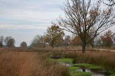 Wandelexcursie naar slaapplaatsen spreeuwen en ganzen in Bargerveen
