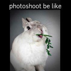 Photoshoots! #rabbit #rabbits #cuteanimals #cuteanimal #bunny #bunnies #pet #pets