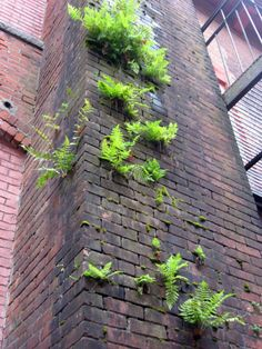I Am Organic Gardening Code: 8496415283 Man Vs Nature, Urban Nature, Foto Art, Arte Floral, Architecture, Amazing Nature, Botany, Beautiful World, Organic Gardening