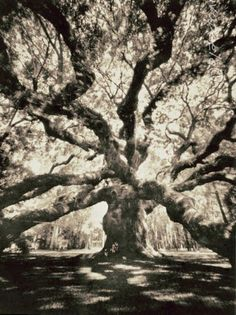 Angel Oak by Iva Peele