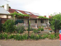 Najas garden