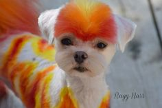 Baby on fire! Thanks Juliebee Duguay shared this with us, OPAWZ Permanent Hair Dyes have been used