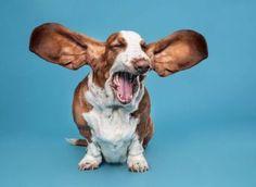comment gerer les aboiements votre chien