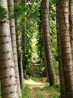 Northern california forests and california on pinterest