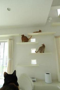 壁と同じホワイトの板を左右交互に取り付けたシンプルなキャットウォーク。飾り棚のようにも見えるので、部屋に溶けこんで違和感を感じないですよね。四角い小さな窓から外をのぞくこともできるから猫ちゃんも嬉しいはず♪