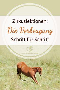 Zirkuslektionen: So bringst Du Deinem Pferd die Verbeugung bei!