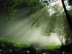En la profundidad del Bosque: Bosques encantados