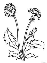 Výsledek obrázku pro jarní bylinky omalovánky