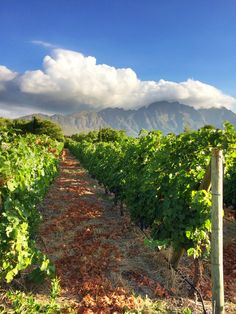 Franschhoek Wine Tasting Experience, Rest Of The World, Countries Of The World, South Africa, Followers, Cape, Travel Destinations, Sunrise, Scenery