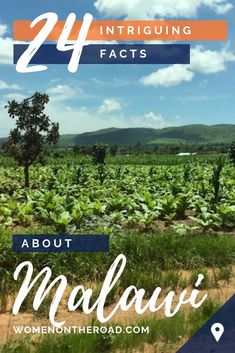 Thinking about visiting Malawai in Africa? Here are 24 intriguing facts about Malawi that will make you want to add this travel destination to your bucket list! Solo Travel Tips, Travel Advice, Travel Hacks, Travel Ideas, Africa Destinations, Travel Destinations, Senior Trip, Road Trip Essentials, Africa Travel