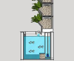 Grow Food at Home with Lettuce Evolve's Compact Aquaponic Garden