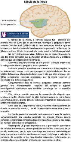 Infografía Neurociencias: Lóbulo de la ínsula. | Asociación Educar