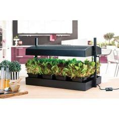 Vijver: het planten van waterplanten: soorten en diepte plant, water, vijverplanten, vijverplant, vijvers, beplanten, kopen