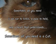 Sometimes All You Need Is A Cat... -I made this with photo of my Cindle ~ RIP little one. - - - a paw to hold, ear to listen, heart that understands, all you need, feline, furkid, cat up close, saying, cat love, cat lover, loving, pet parent, meme.