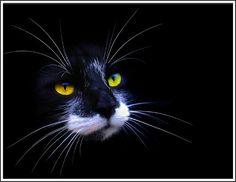 4 Kitten Cat Black Cats Kittens Halloween Greeting Notecards/ Envelopes Set