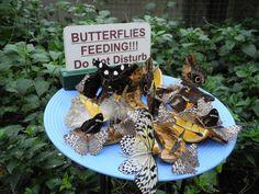 BUTTERFLIES FEEDING !!!