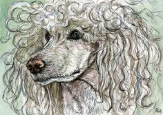 poodle hair - what we BOTH look like after a run on the canal :)