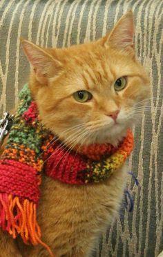 Bob! :D #CatNames