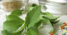 Stevia is commonly known as sweet leaf or sugar leaf; its leaves and extracts are obtained from perennial stevia shrubs native to South America. Extract of...