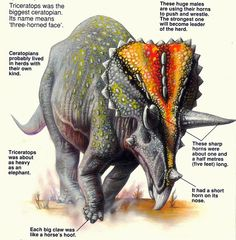 Love in the Time of Chasmosaurs: Vintage Dinosaur Art: The Usborne Book of… All Dinosaurs, Jurassic World Dinosaurs, Jurassic Park World, Dinosaurs Preschool, Dinosaur Facts, Dinosaur Fossils, Dinosaur Pictures, Animal Bones, Extinct Animals