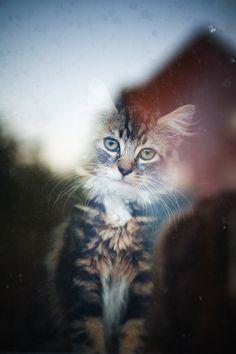 cat by Arina S, via 500px