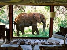 South Africa I want to stay here.  How awesome would it be to lay in bed an see an elephant!