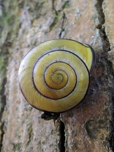 Snail - what a perfect spiral.