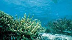 under the sea pictures - Google zoeken