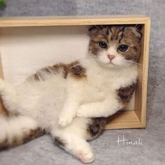 This cat is needle felted - not real - amazing.                                                                                                                                                     More