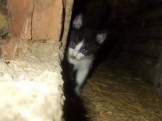little cat - shy