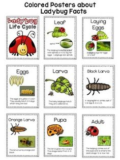 Ladybug Facts and Life Cycle Readers, Writing, Craft, Posters, Life Cycle Ladybug Picnic, Ladybug Crafts, Kindergarten Themes, Sequencing Activities, Life Cycles, Lesson Plans, Insects, Cycling, Ladybugs