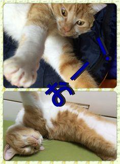 2016.10.30  #うち猫