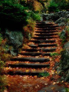 #061013 Stairs at Glen Ellis Falls, White Mountains, New Hampshire