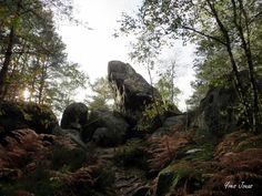 Forêt des 3 pignons © Y.Jouas