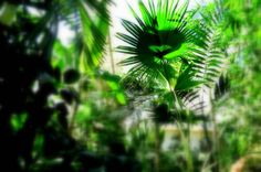 Nature Photography Green Plants Summer Sun by CandyMountainPhotos, €14.00