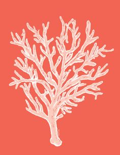 #wallart Coral - white on coral  Art Print