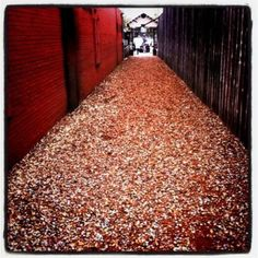 Blast from the past!  Who's taken a stroll down Bottlecap Alley in Northgate?  You're not an Aggie if you haven't!  :)