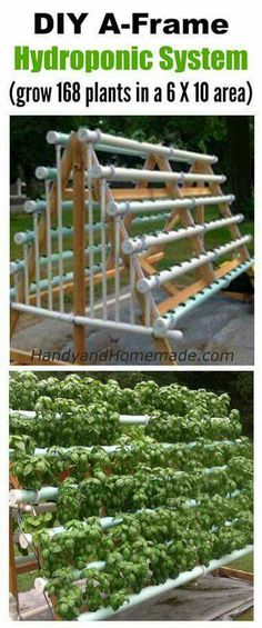 DIY A-Frame Hydroponic System How To Grow 168 Plants In A 6 X 10 Area hydroponicsgardening hydrop&; DIY A-Frame Hydroponic System How To Grow 168 Plants In A 6 X 10 Area hydroponicsgardening hydrop&; Amy Broadfoot […] tips Hydroponics System, Hydroponic Gardening, Container Gardening, Organic Gardening, Gardening Tips, Aquaponics Diy, Aquaponics Greenhouse, Urban Gardening, Hydroponic Growing