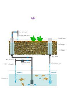 Interesting aquaponic system